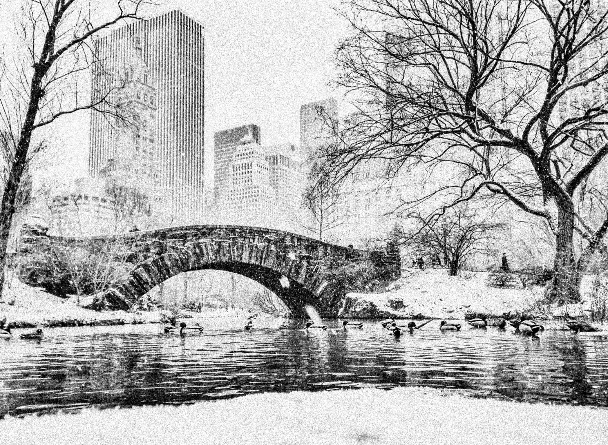 mallard-ducks-floating-on-water-with-cityscape-in-background-in-winter_t20_zrPGVX-46